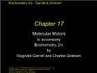 Bài giảng Biochemistry 2/e - Chapter 17: Molecular Motors