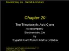 Bài giảng Biochemistry 2/e - Chapter 20: The Tricarboxylic Acid Cycle