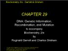 Bài giảng Biochemistry 2/e - Chapter 29: DNA: Genetic Information, Recombination, and Mutation