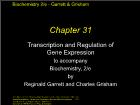 Bài giảng Biochemistry 2/e - Chapter 31: Transcription and Regulation of Gene Expression