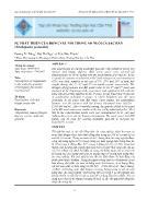 Sự phát triển của động vật nổi trong ao nuôi cá sặc rằn (trichogaster pectoralis)