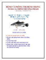 Bệnh và phòng trị bệnh trong nuôi cá chẽm thương phẩm