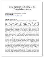 Công nghệ sản xuất giống cá mú (Epinephelus coioides)