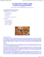 Hướng dẫn kỹ thuật nuôi cá bống tượng