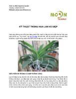 Kỹ thuật trồng hoa lan hồ điệp