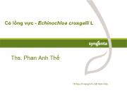 Tìm hiểu Cỏ lồng vực - Echinochloa crusgalli L